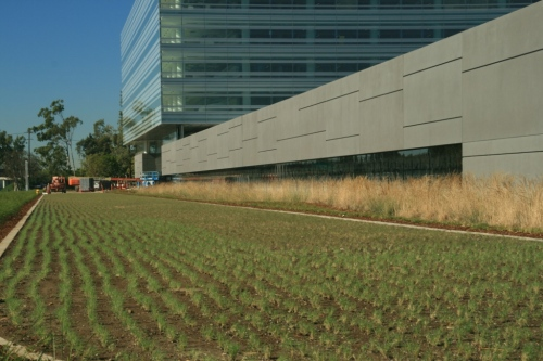 Takao Nursery UC Verde Buffalograss Hyundai Project